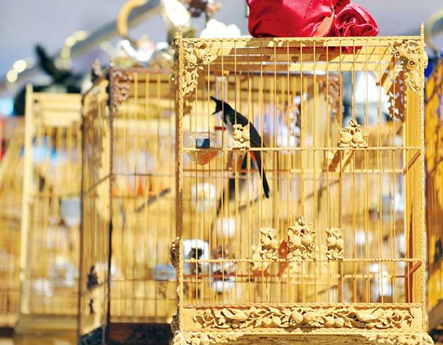 mua bán chim cảnh
