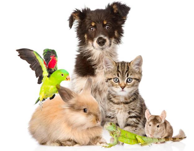 mua bán vật nuôi thú cưng tại chợ tốt