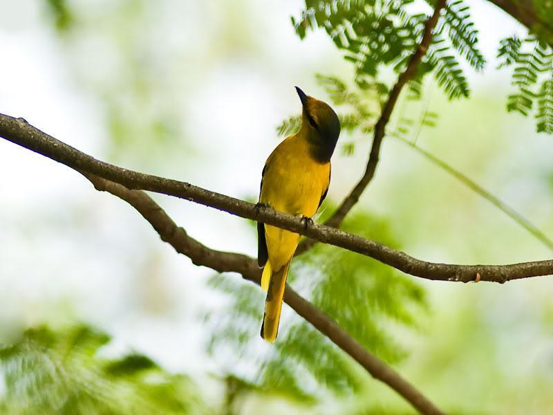 Điểm danh các loại chim cảnh dễ nuôi được yêu thích nhất hiện nay