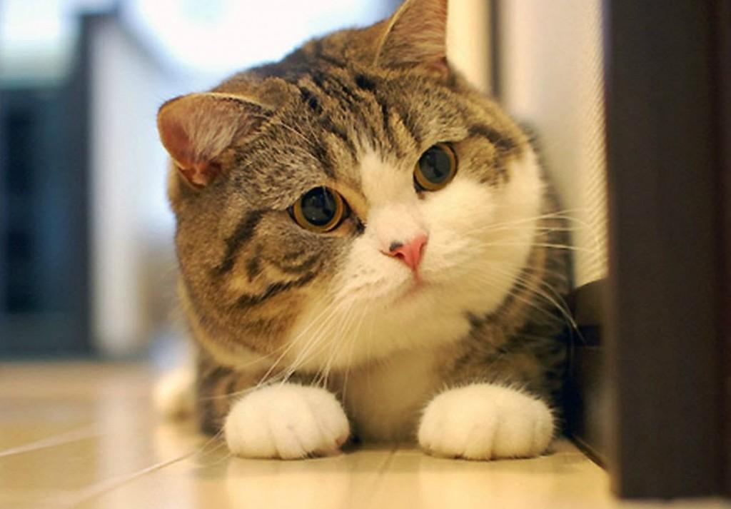 Nuôi mèo cần gì? Những vật dụng cần thiết bạn không thể bỏ qua