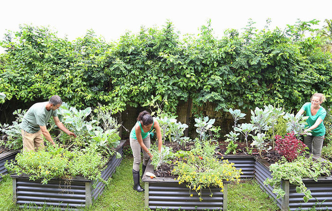Người làm vườn, chăm sóc cây với quy mô lớn