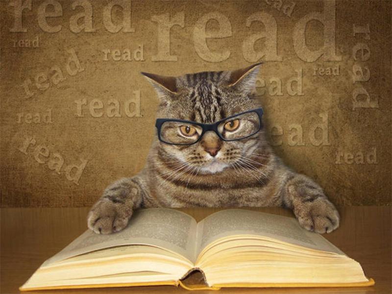 List các giống mèo thông minh nhất, đặc điểm của từng loài