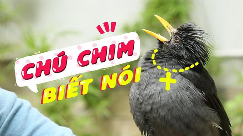 List các loài chim biết nói nghe chỉ muốn bắt ngay về nhà