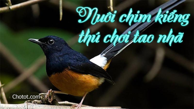 Top 5 các loài chim cảnh nhỏ dễ nuôi, xinh xắn, hót hay