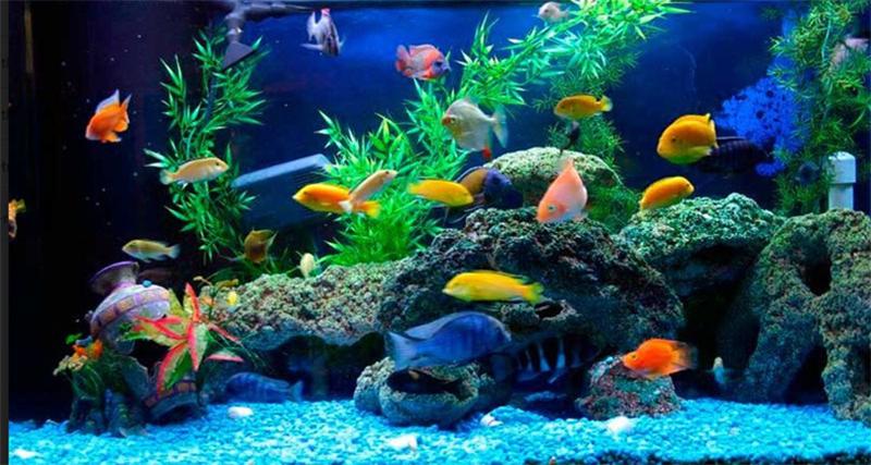Hướng dẫn cách nuôi cá cảnh cho người mới bắt đầu chơi