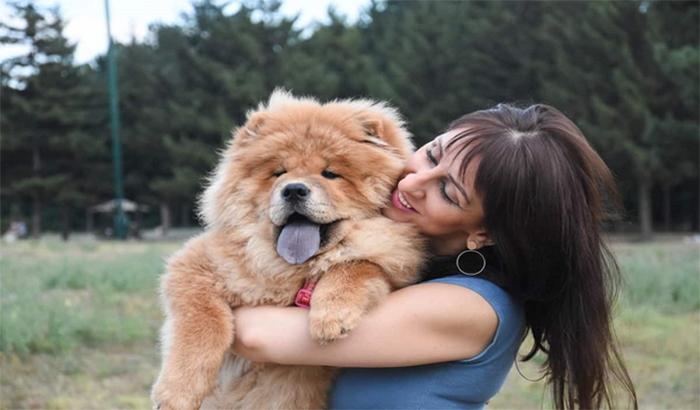 Chăm sóc, tắm rửa cho chó Chow Chow để chúng có sức khỏe tốt
