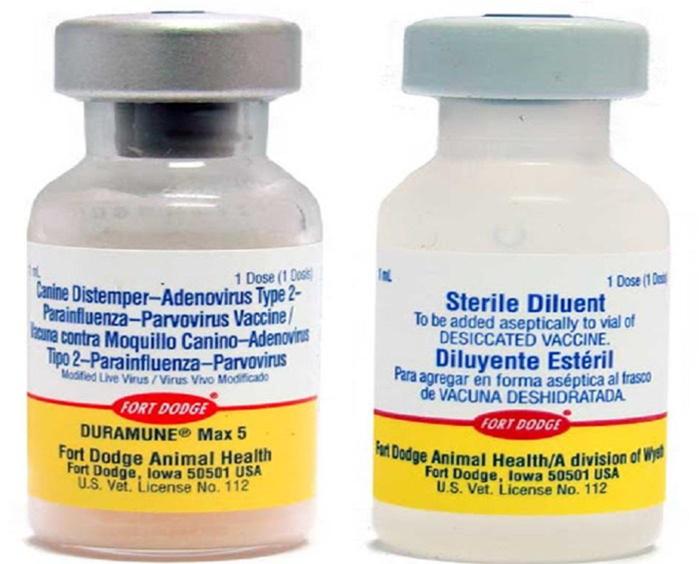 Tiêm đúng loại Vacxin và liều lượng khiêm tiêm cho chó tại nhà