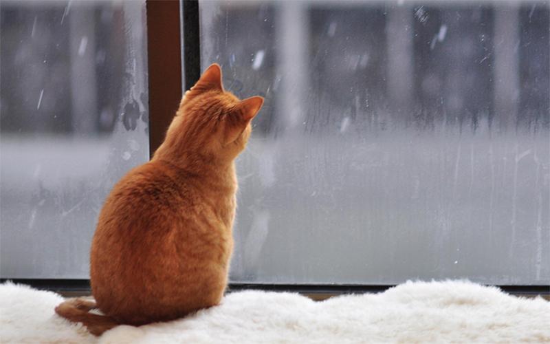 Tất tần tật những điều cần biết về bệnh mèo bị trầm cảm