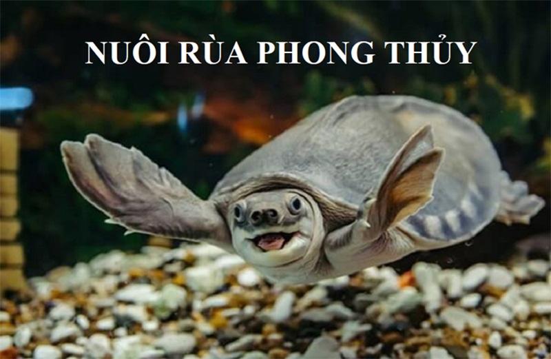 Hướng dẫn nuôi rùa phong thủy A-Z