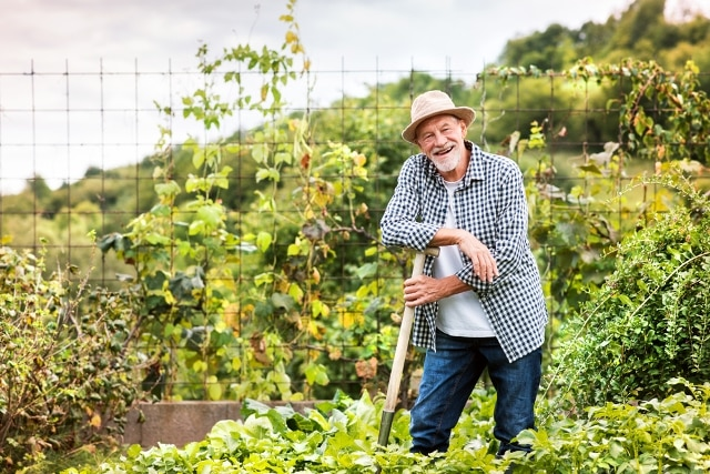 nhân viên làm vườn rau củ với quy mô lớn