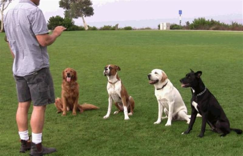nhân viên huấn luyện thú cưng tphcm