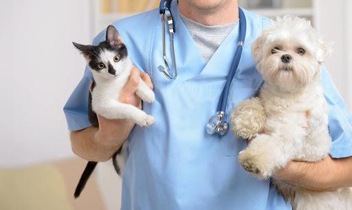 việc làm bác sĩ thú y tphcm