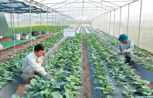 Công nhân trang trại bao ăn ở