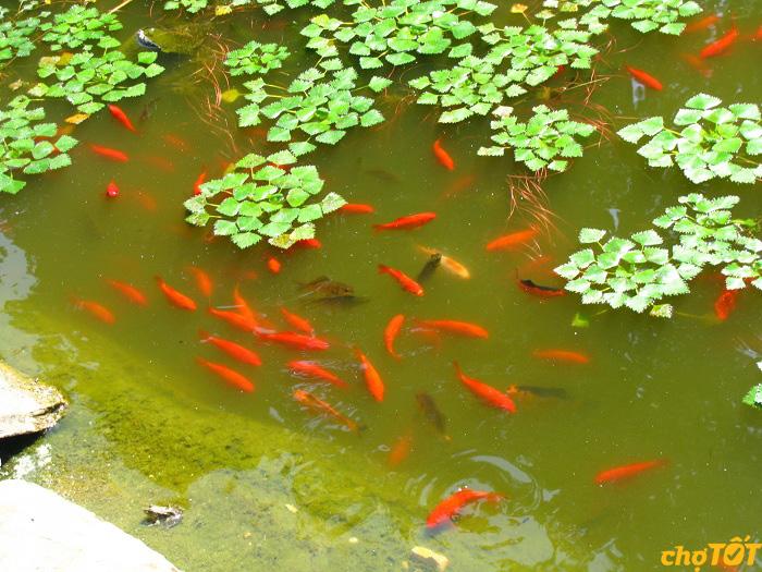 Thức ăn cho cá trong thiên nhiên