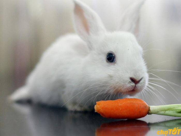 Thức ăn cho thỏ giá bao nhiêu