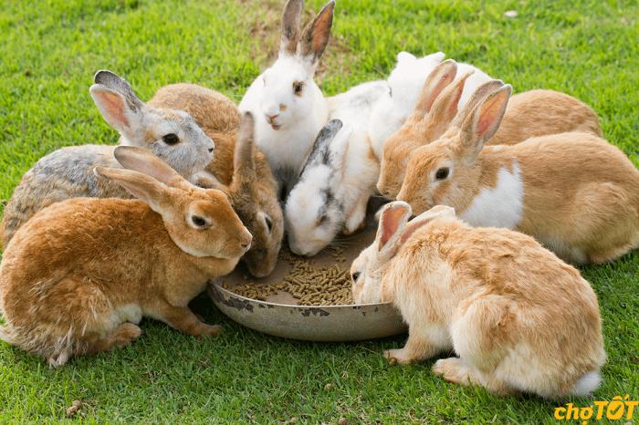 Khẩu phần ăn cho thỏ