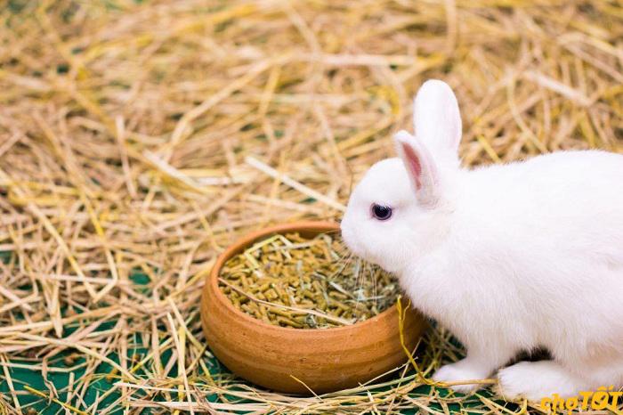 Thức ăn bổ sung đạm cho thỏ