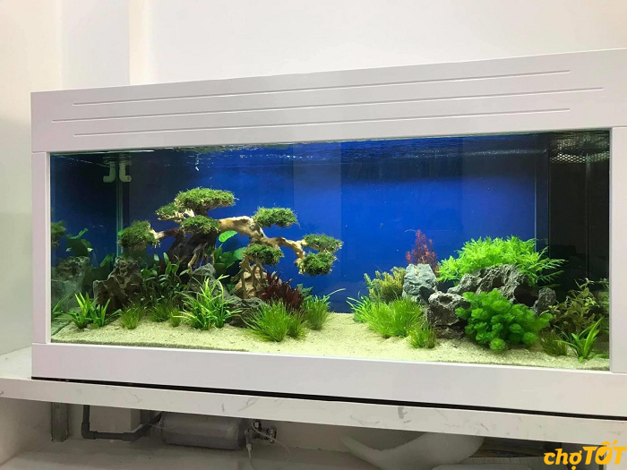 Bể cá cảnh thủy sinh