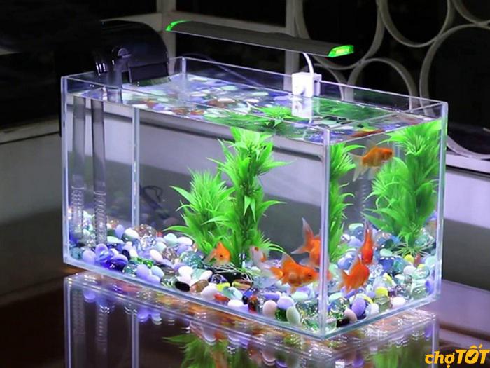 Bể cá cảnh bằng kính