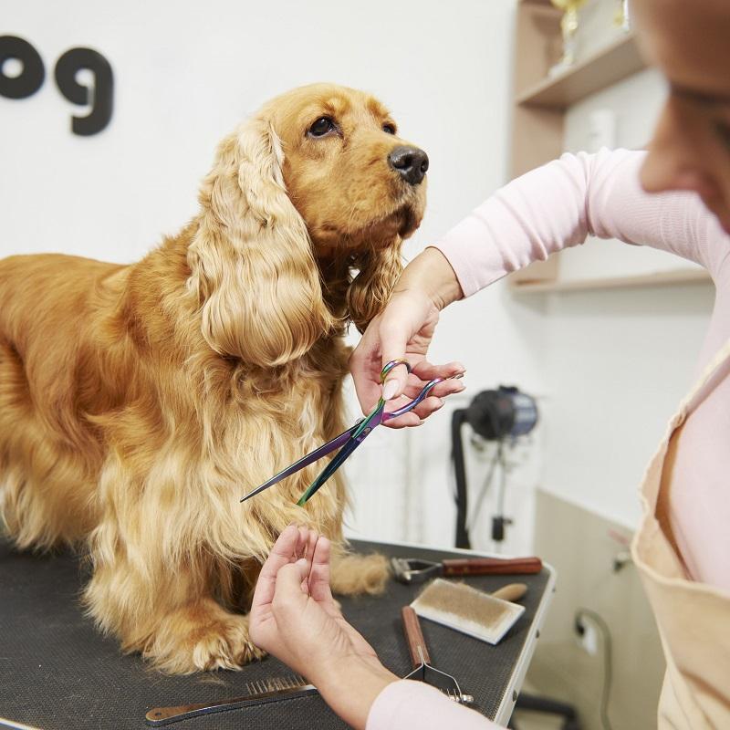 Dịch vụ cho thú cưng