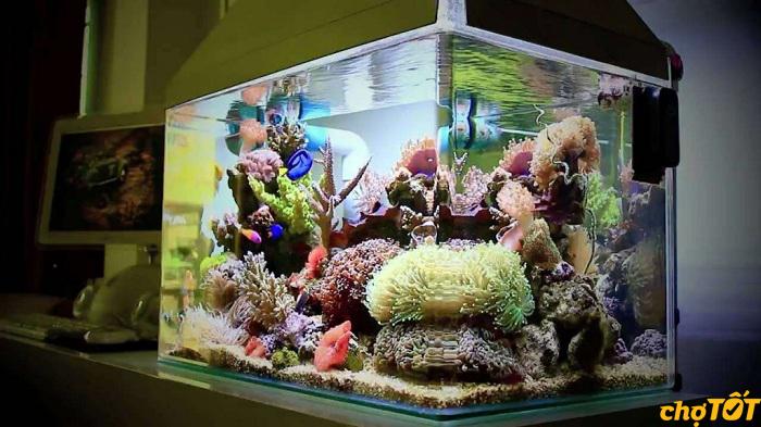 Bể cá cảnh giá bao nhiêu
