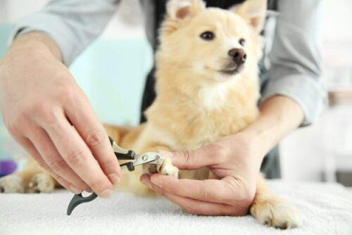 Làm thế nào để cắt móng cho chó đúng cách và an toàn nhất?