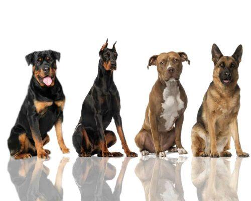 Tại sao phải tẩy giun cho chó? Thuốc tẩy giun chó nào tốt?