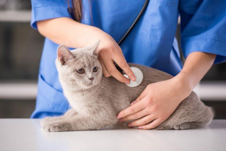 Mèo mang thai bao lâu? Hướng dẫn cách chăm sóc mèo mang thai