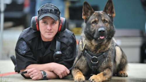 Chó nghiệp vụ: Những thông tin cần biết, nên mua giống chó nào?