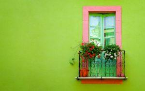Giải pháp cây cảnh cho nhà nhỏ