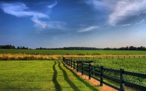 Xây nhà cấp 4 trên đất nông nghiệp có hợp pháp không?