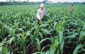 Một số lưu ý về giá đất nông nghiệp 2014