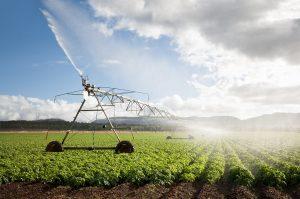 Những điều cần biết về thủ tục mua bán đất nông nghiệp