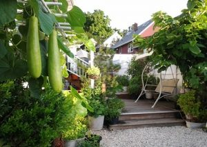 Cách thiết kế sân vườn 30m2 đang được yêu thích