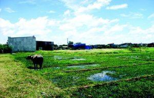 Chia sẻ kinh nghiệm khi mua đất thổ cư