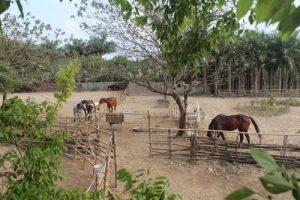 Tư vấn kinh nghiệm mua đất trang trại