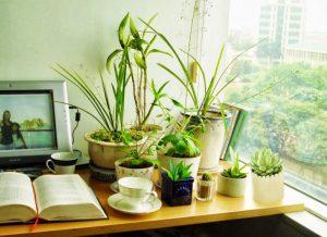 Tuổi Mùi trồng cây gì mới hợp mệnh, gia tăng vận khí