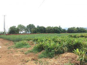 Đất LNK là gì? Quy định mua đích sử dụng và so sánh với đất ONT